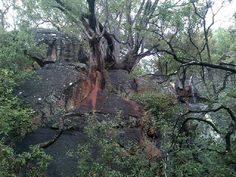 Bushveld rock formation in the Silver Leaves venue that offers an opportunity for stunning photoshoots.
