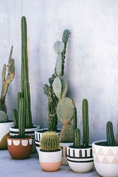 Pinned to Nutrition Stripped | Home #cactus #Nutritionstripped