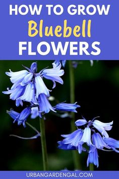 Bluebells are attractive, low maintenance perennial flowers that come back year after year, creating a beautiful carpet of blue flowers in your yard. In this article, you'll learn about growing and caring for bluebells, so you can enjoy their beauty in your flower garden. #flowers #flowergarden #perennials Hardy Perennials, Flowers Perennials, Planting Flowers, Flowering Plants, Flower Gardening, Gardening For Beginners, Gardening Tips, Blue Bell Flowers, Love The Earth