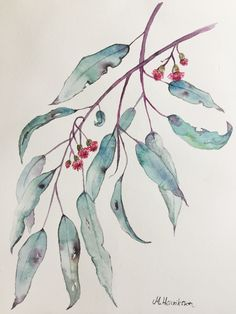 Eucalyptus, watercolorpainting