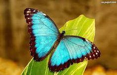 Znalezione obrazy dla zapytania motyl