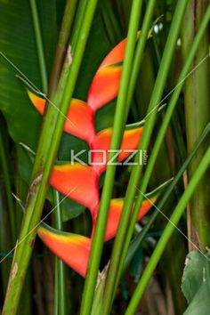 flower and stem. - Close-up image of flower and stem.