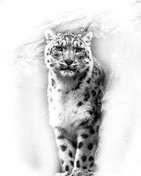Snow Leopard Pencil Effect by Linsey Williams on Crated. #bigcat #wildcat #snowleopard @lin_dies