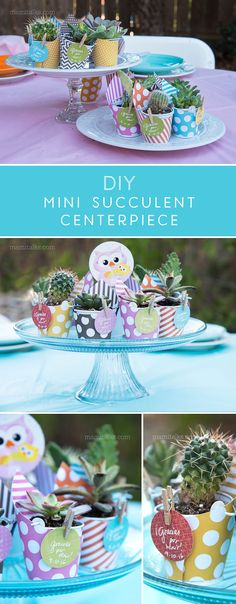 DIY Mini Succulent and Cactus Favors + Centerpiece , make these 2 in 1 beauty for a Baby Shower or party -MamiTalks.com