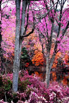 ✮ Fall in Pink . the colour to be seen in! Beautiful World, Beautiful Places, Beautiful Sites, All Nature, Autumn Art, Nature Pictures, Pretty Pictures, Amazing Photos, Graphic
