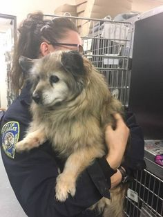 18-year-old dog rescued from shelter in the nick of time.
