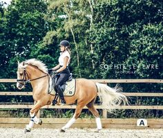The most important role of equestrian clothing is for security Although horses can be trained they can be unforeseeable when provoked. Riders are susceptible while riding and handling horses, espec… Dressage Horses, Horse Tack, Horse Stalls, Horse Barns, Equestrian Outfits, Equestrian Style, Equestrian Problems, Equestrian Fashion, Palomino