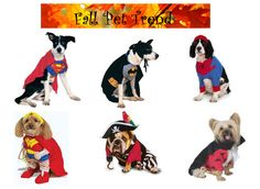 Halloween Costumes For Pets! Dress up your furry friends in the most spooktacular costumes! http://blog.gifts.com/gift-trends/fall-pet-trends#