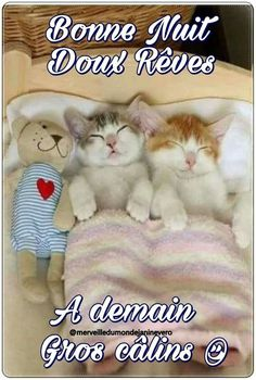 Teddy Bear Pictures, Tu Me Manques, Happy Friendship Day, Good Night Image, Minions, Wish, Messages, Pets, Nighty Night