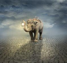 On the road ~ Animal Photos on Creative Market