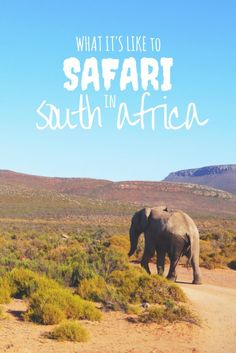 On safari in South Africa… or that time I got too close to a lion