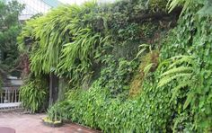 taman-vertikal-murah di http://taman-vertikal-indonesia.blogspot.com