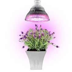 SuperLED E27 24W LED Plant Grow Lights Bulb for Hydroponic Garden Greenhouse Indoor Plants Seedlings  4 blue  8 red ** Read more reviews of the product by visiting the link on the image.(This is an Amazon affiliate link and I receive a commission for the sales) #IndoorGardeningHydroponics
