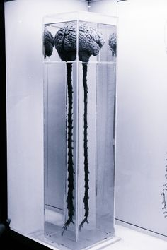 brain and spinal cord...