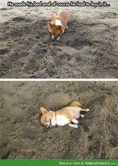 Corgi at the beach! :)