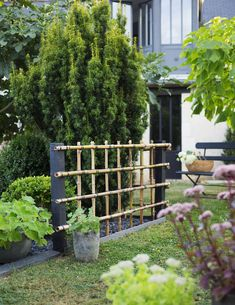 Fabriquer une palissade en bambou pour le jardin - Marie Claire Patio Fence, Fence Design, Woodland Party, Pergola, Bamboo, Planters, Outdoor Structures, World, Pins