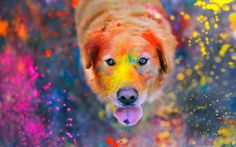 Fondo de pantalla: Can Colors | Wallpaper