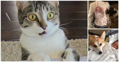 These #Pets Didn't Know They'd Be Sharing Their Lives With A #Baby. Their Reactions? Priceless!