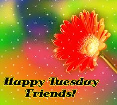 Tuesday Images for social networks Happy Tuesday Images, Happy Tuesday Morning, Happy Tuesday Quotes, Tuesday Humor, Happy Week, Happy Quotes, Thursday, Tuesday Greetings, E Greetings
