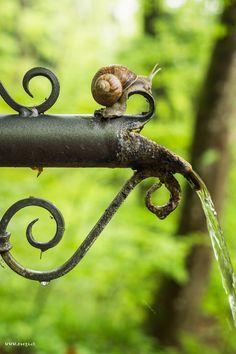 """lensblr-network: """" burgundy snail by raegi photo by Raegi (raegi-foto.tumblr.com) """""""