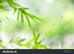 Green Nature Copy Space Using Background ภาพสต็อก (แก้ไขตอนนี้) 405950530 Nature Green, Green Leaf Background, Green Leaves, Herbs, Stock Photos, Herb, Medicinal Plants