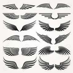 bird wings : Wings. Elements for design. Vector illustration.