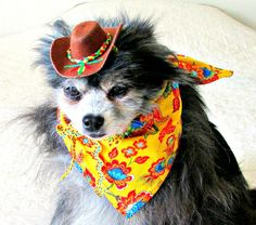 Dog Clothes MexicanStyle Hat/Bandanna .....cheesy like