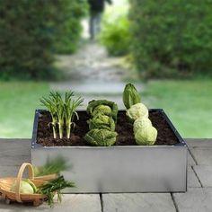 Buy Galvanised raised bed - Grow your own fresh vegetables: Delivery by Waitrose Garden in association with Crocus Garden Inspiration, Plants, Cactus Plants, Raised Beds, Wild Flowers, Edible Garden, Crocus, Urban Garden, Garden
