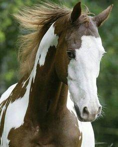 Whew it's been a long day. I just can't wait to hit the hay. #SaddlesForSale #Horses #MySaddleTrader | MySaddleTrader.com