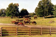 Proulx Fencing is perfect for horse farms, cattle ranches and farms.