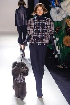 Even dogs know how trendy tartan is, if this poodle at the Mulberry Fall 2013 show. Posted by Redlandspoodles.com