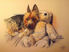 Australian terrier & his teddy, pen & ink. Australian Terrier dog art portraits, photographs, information and just plain fun. Also see how artist Kline draws his dog art from only words at drawDOGS.com #drawDOGS http://drawdogs.com/product/dog-art/australian-terrier-dog-portrait-by-stephen-kline/