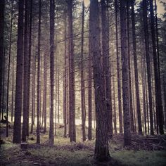 wood . val pusteria .