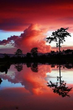 Gorgeous reflection  | nature | | reflections |  #nature  https://biopop.com/