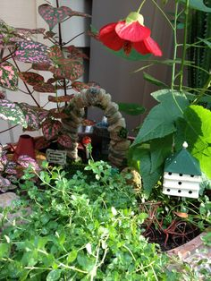 Deep inside the blooming fairy garden. So much to see !