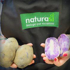 Al NaturaSì di San Bonifacio sono arrivate anche le patate viola, una antica varietà di origine peruviana ricche di antiossidanti.  Al pari delle altre patate, possono essere arrostite, brasate, bollite, fatte al forno, fritte. Si accompagnano bene alle erbe aromatiche, aglio, carciofi, altre verdure, insalata verde. Ottimo anche l'abbinamento con il tartufo. Le nostre vengono coltivate dall'azienda laziale Agrilatina, azienda biologica dal 1987 e biodinamica dal 1993.