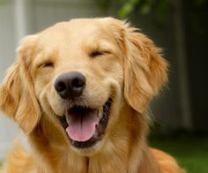 awwww this reminds me of my golden!
