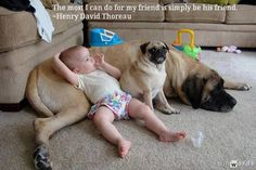 Cute babies playing with funny dogs and puppies, funny video Funny Babies, Funny Dogs, Cute Babies, Funny Animals, Cute Animals, Adorable Dogs, Baby Animals, Amor Pug, So Cute Baby