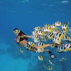 Activities and attractions for Kailua Kona (Big Island of Hawaii). Day trips, beaches, hikes, snorkeling, Kona Coffee, stargazing + more outdoor adventures