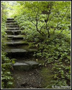 Garden Path | Lakewold Gardens Lakewood, Washington | Gregg Zimmerman | Flickr