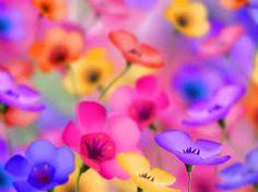 flowers - Google-da axtar