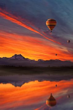 Flight of Delight by Peter From
