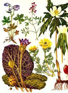 bird botanical flower insect camelia 1835 exotic nature print original antique hand colored engraving