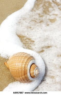 Seashell Stock Photos and Images. 15,305 seashell pictures and royalty free photography available to search from over 100 stock photo brands.