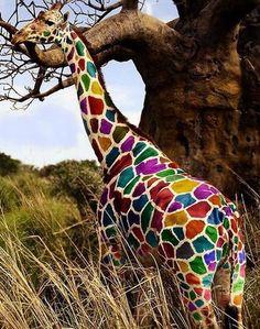 girafa! Essence