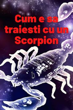 Scorpion, Zodiac, Movies, Movie Posters, Scorpio, Films, Film Poster, Cinema, Movie