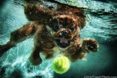 Funny Underwater Dogs