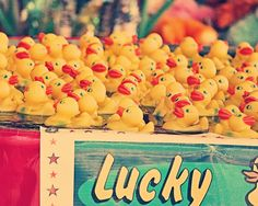 Lucky Ducks  8x10 photograph  fine art print by maybesparrowsplace, $25.00