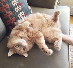 I dare you to rub my belly.