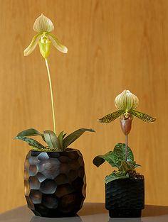 vasos e arranjos de flores - Casa